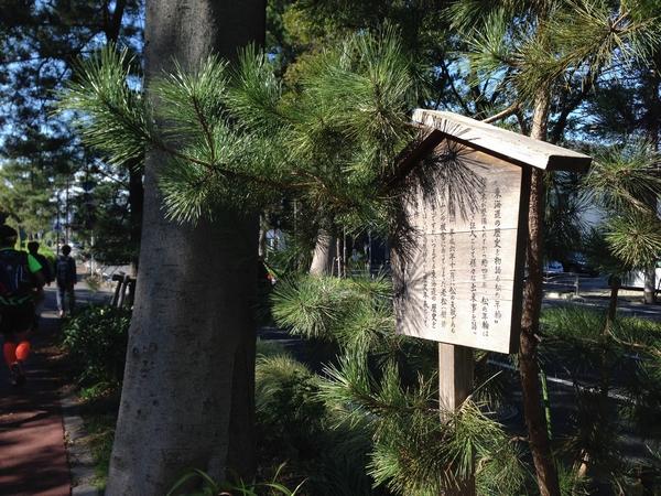 東海道の歴史を物語る松の年輪