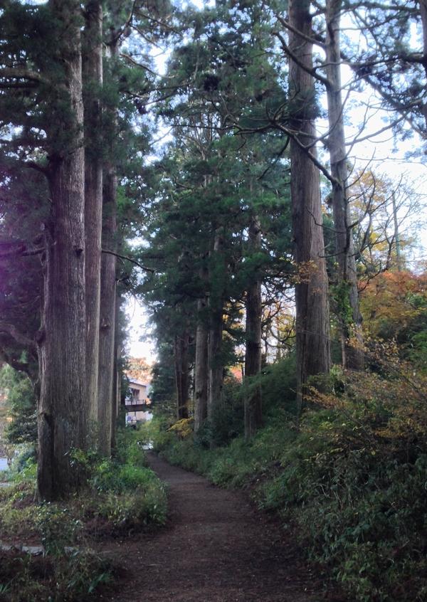 芦ノ湖の杉並木