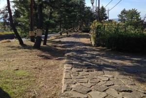 三島松並木